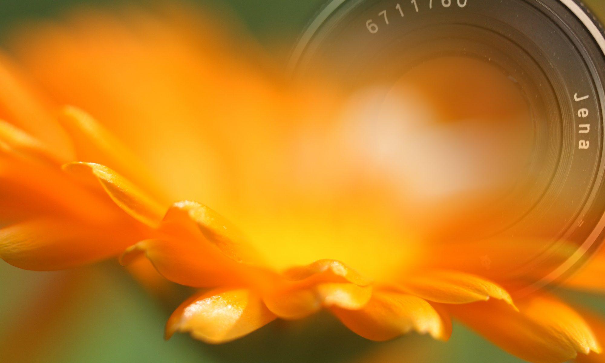 Blütenfotografie